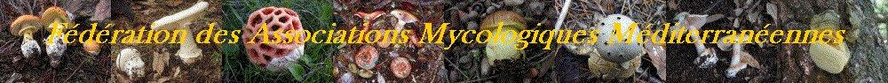 Fédérations des Associations Mycologiques Mediterranéennes - FAMM